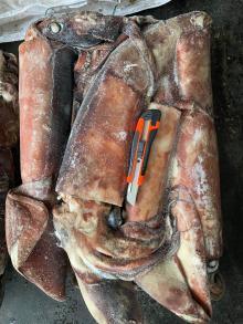 Frozen Gaint squid WR 2-4kg/pc